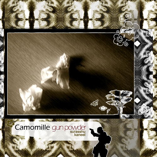 Cover of Camomille GunPowder